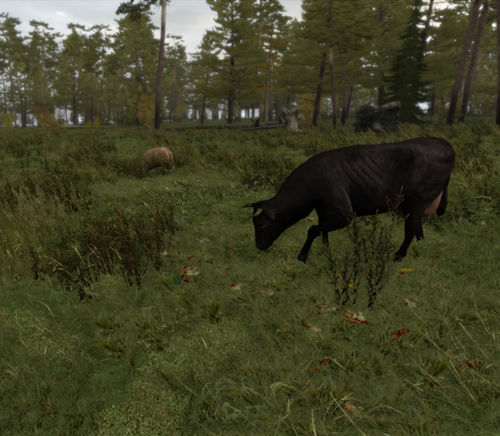 A sheep and a cow - excellent forage for your unit.